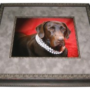 Frame Your Pet